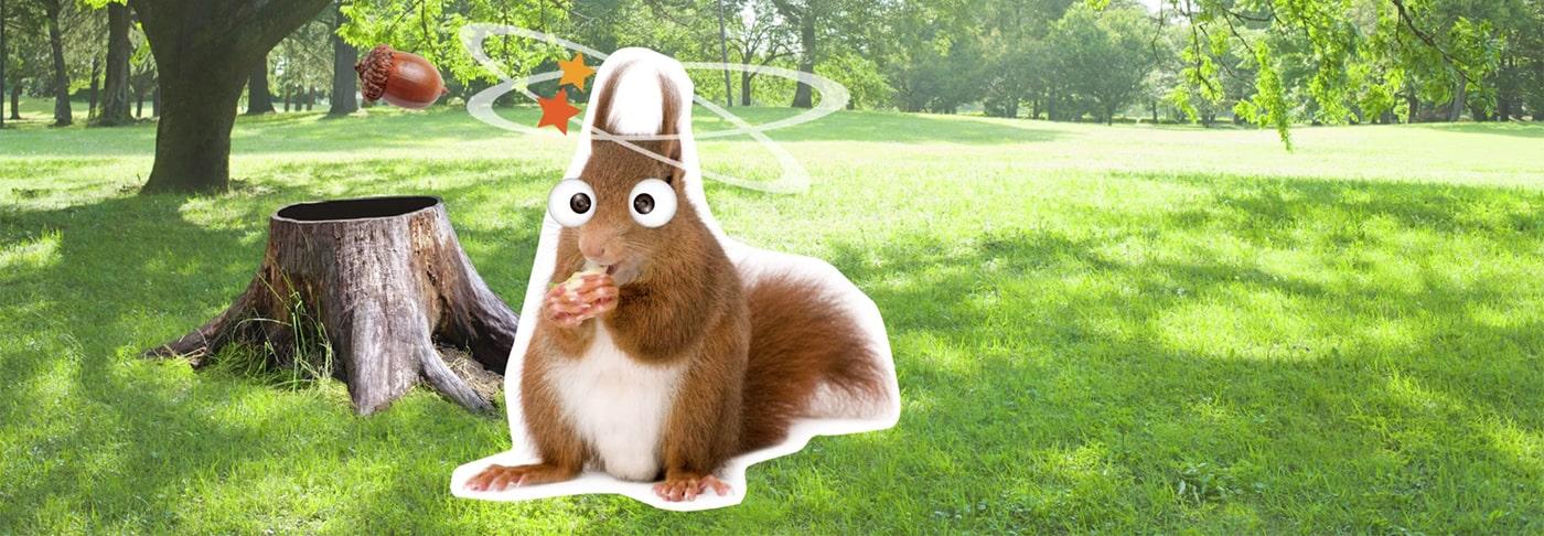 confused squirrel eating nut